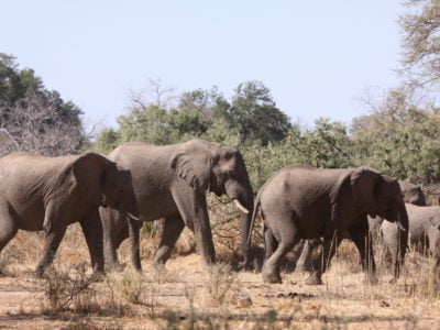 Mwaluganje Elephant Sanctuary