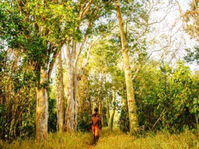 Kaya Kinondo Sacred Forest